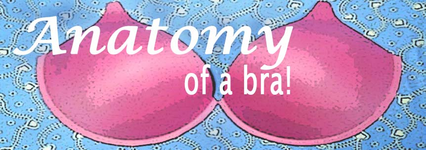 Anatomy of a bra